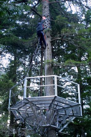 man climbing tree on zipline platform
