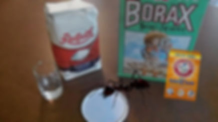Ant help Ideal Touch Janitorial_edited-1