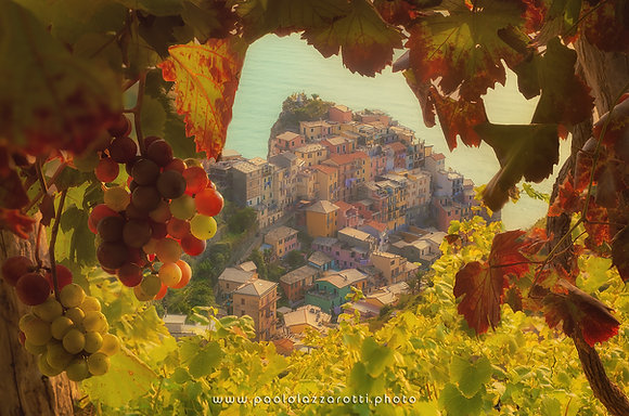 Manarola vineyards (Part 3)