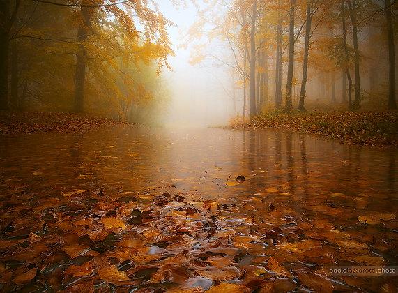 Autumn Flooding