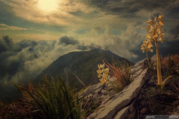 Dreaming Paradise