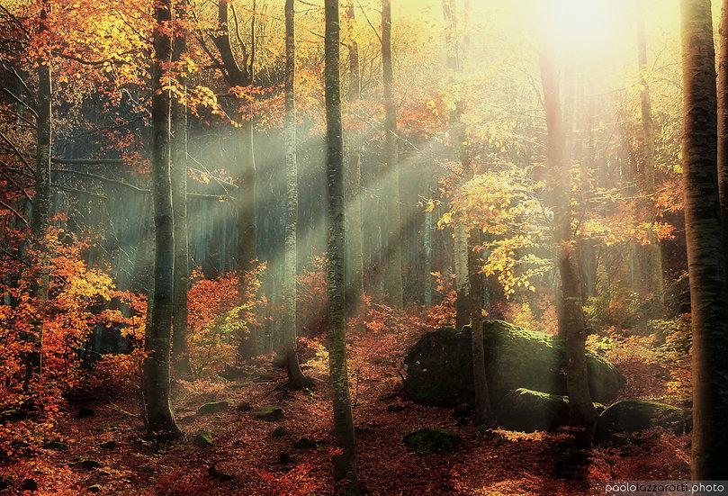 Scent of Autumn