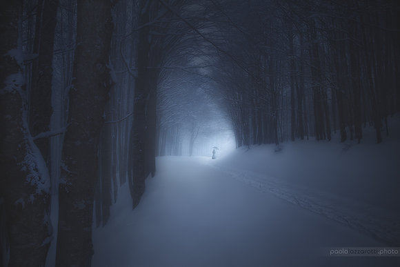 A Winter Night in the Forest