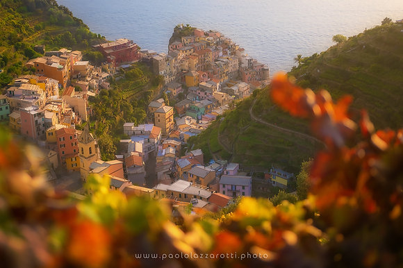 Manarola vineyards (Part 2)