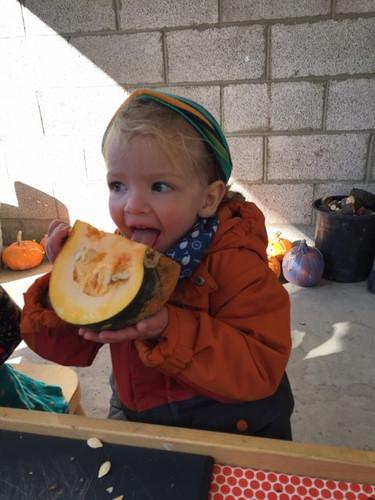 Tasting a Pumpkin.jpg