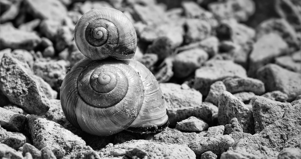 snails-700868_1280.jpg