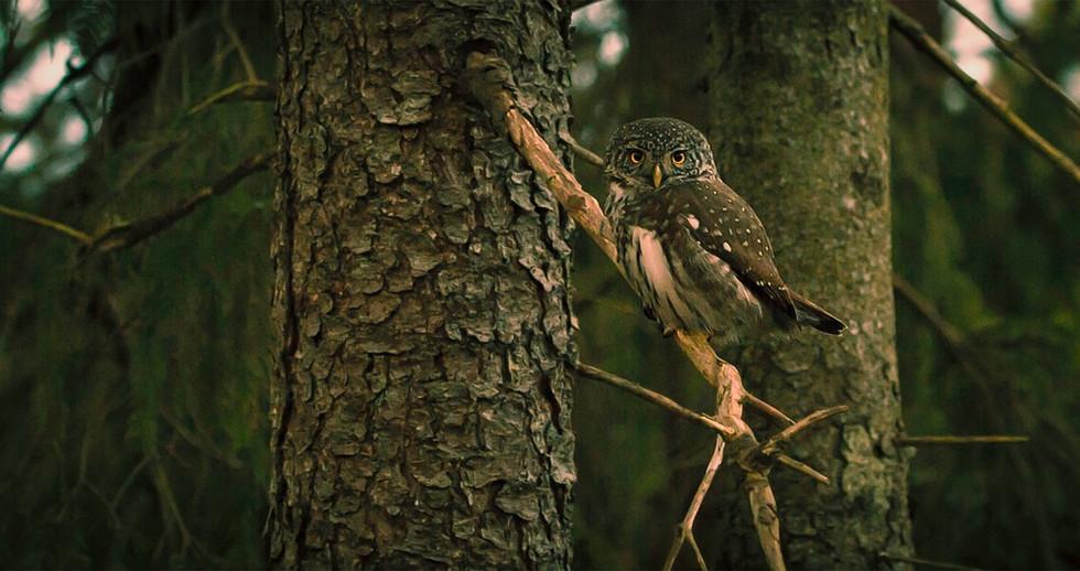 owl-918427_1280.jpg