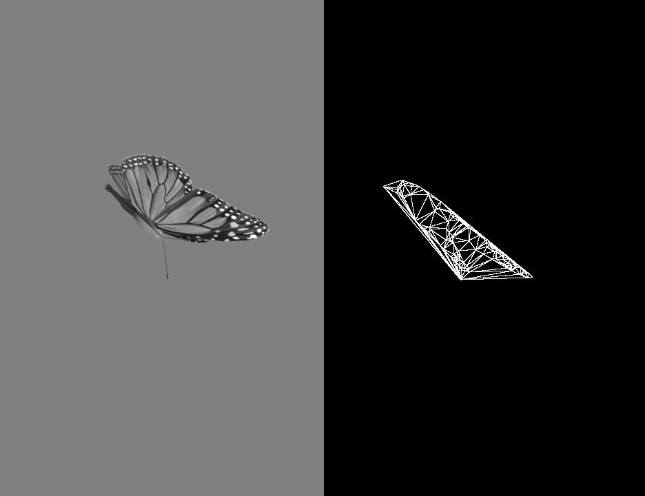 blackbutterfly.mp4