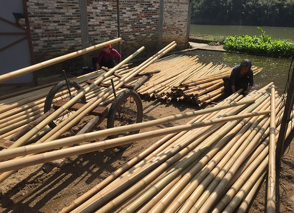 Standard Diameter Bamboo Culms