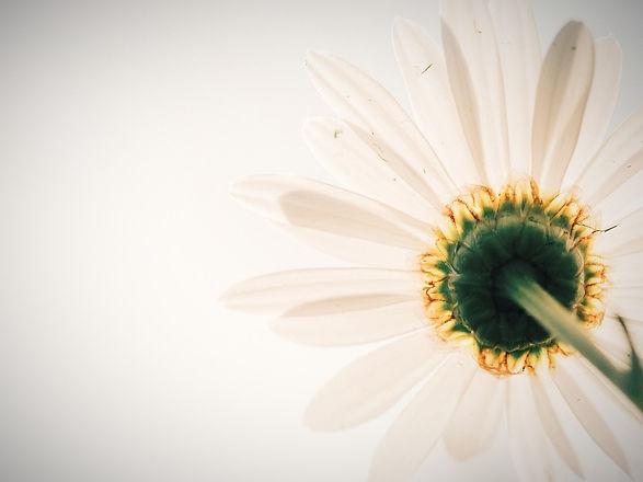 daisy-801813_960_720_edited.jpg