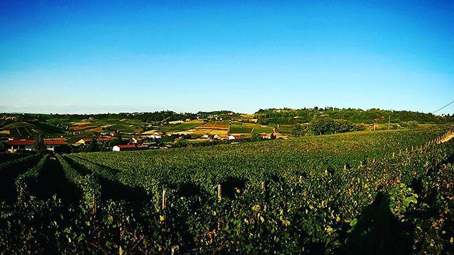 Buongiorno dal bricco #cascinasansiro #costiglioledasti #piemonte #wine #bio #madeinitaly #landscape