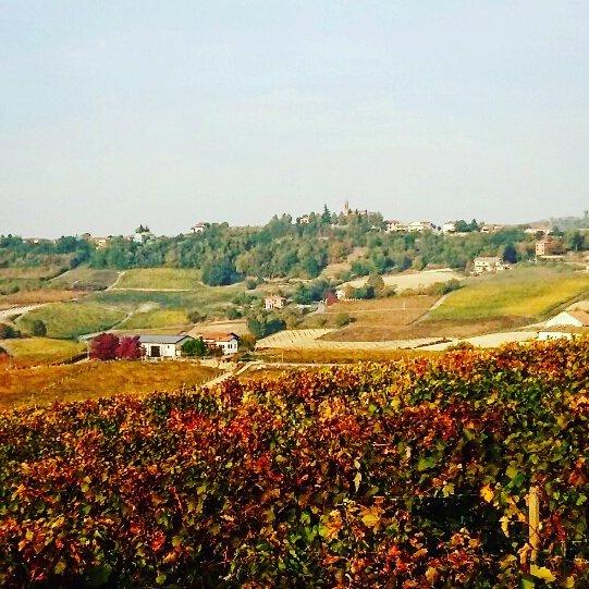 #cascinasansiro #autunno #langhe #monferrato #piemonte #wine #landscape