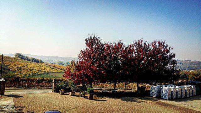 L'autunno ed i suoi mille colori #cascinasansiro #autunno #langhe #monferrato #piemonte #landscape