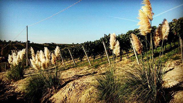 #cascinasansiro #piemonte #langhe #monferrato #wine #bio #landscape
