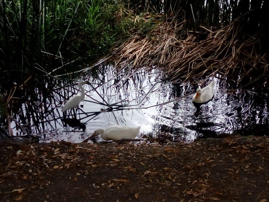 Chapulco - En el movimiento del agua