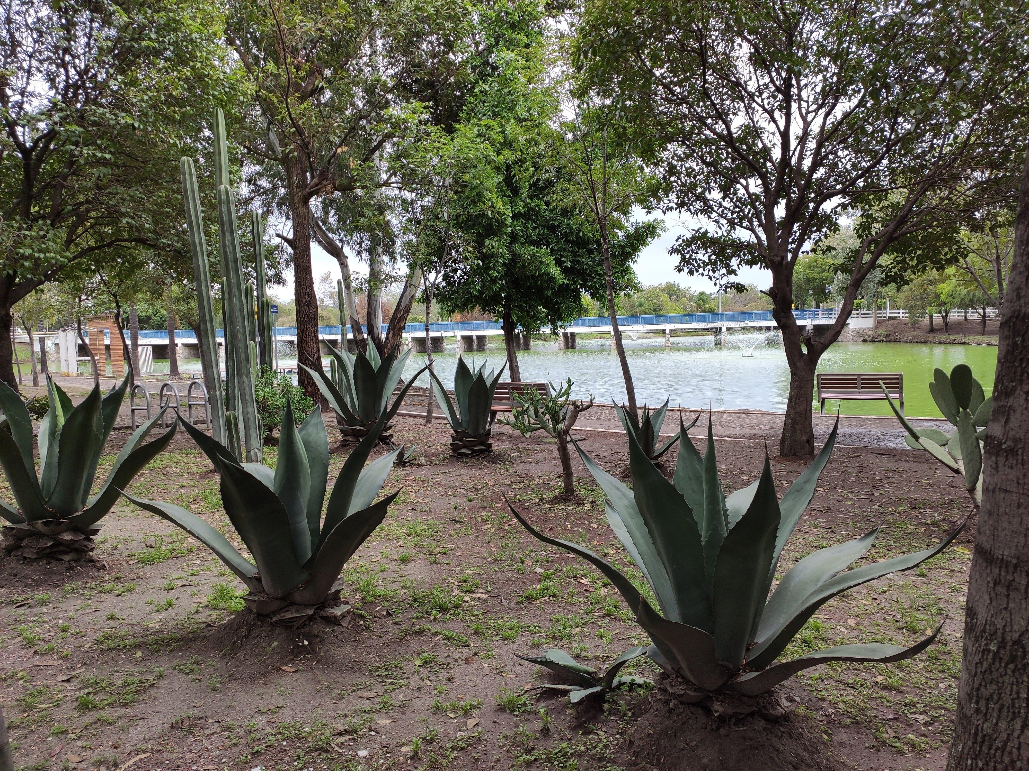 Ecologico - Los suelos