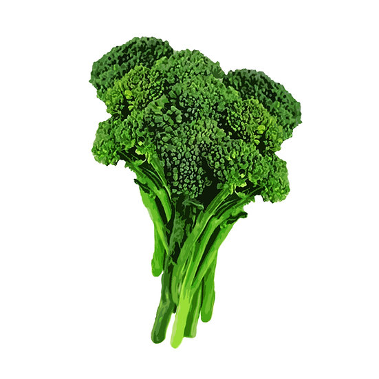 Calabrese broccoli seeds 'GREEN SPROUTING' ORGANIC