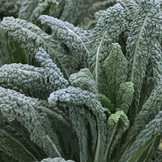 Kale Seeds 'NERO DI TOSCANA' ORGANIC
