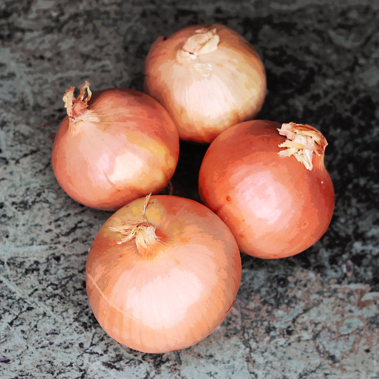 Onion seeds 'Sturon' ORGANIC
