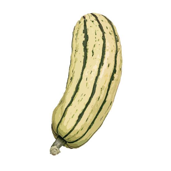 Squash Seeds 'DELICATA' ORGANIC