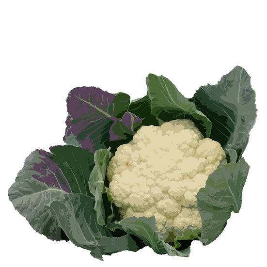Cauliflower seeds 'SNOWBALL' ORGANIC