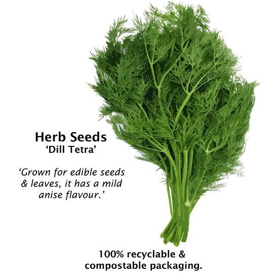 Herb seeds DILL 'TETRA' ORGANIC