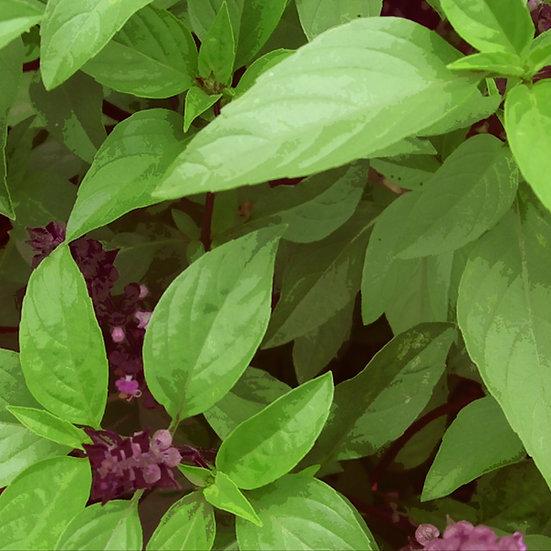 Basil seeds 'THAI' ORGANIC