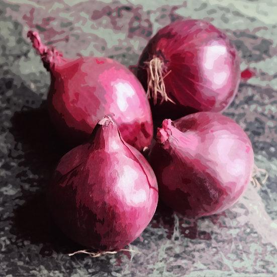 Onion seeds 'ROBELJA' ORGANIC