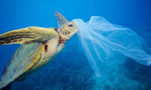 turtle plastic .jpg
