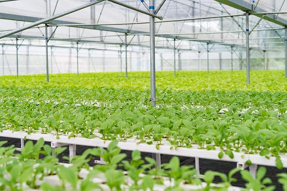 organic-vegetables-PWVGPTF.jpg