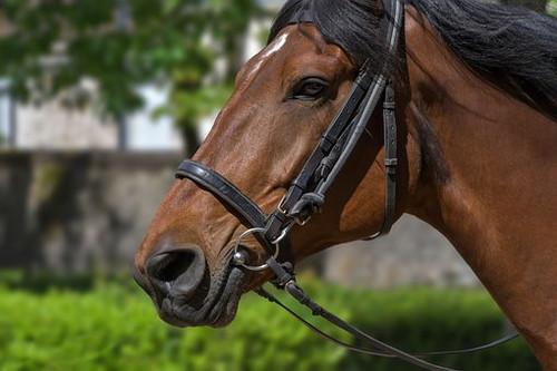 horse-3448273__340.jpg