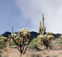 Superstition Mountains 2