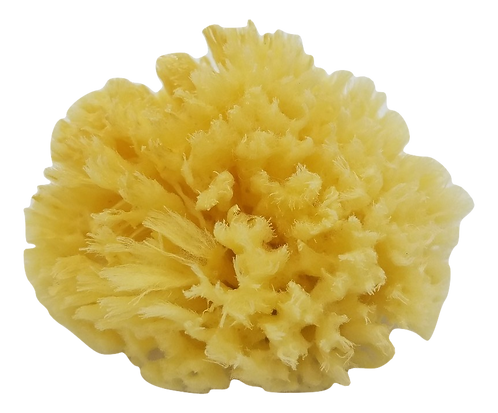 Wool Sea Sponge - Medium