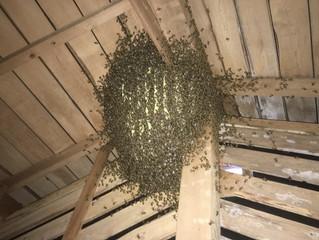 蜂に刺されてしまう前に・・!(東京蜂駆除・巣の撤去・スズメバチの脅威!ショック死の恐れ)