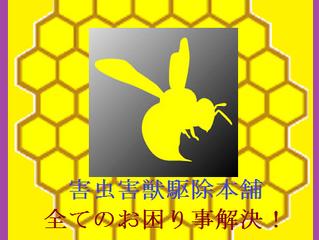 川崎市多摩区の蜂駆除専門業者の害虫害獣駆除本舗