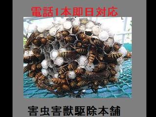 多摩区のアシナガバチ駆除・巣の撤去、専門業者