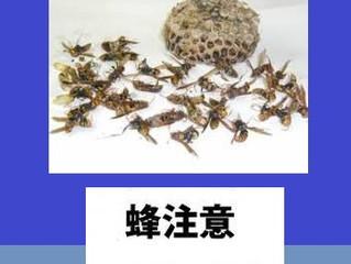 東京都多摩市の蜂駆除(スズメバチ駆除、アシナガバチ駆除)の専門業者