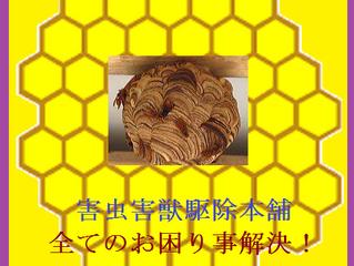 川崎市宮前区の蜂駆除、ハチ退治、蜂の巣駆除の専門業者