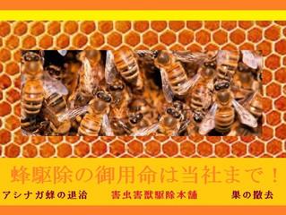 調布市で蜂にお困りの際は弊社にご相談ください