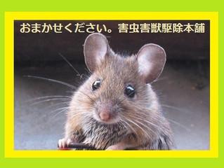 害虫害獣駆除本舗 東京都世田谷区のお客様からネズミ駆除のご依頼を頂きました