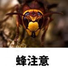 横浜市緑区でスズメバチ駆除・巣の撤去