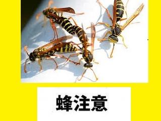 川崎市高津区の蜂駆除、蜂の巣駆除の専門業者