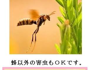 横浜市青葉区の蜂駆除(スズメバチ駆除、アシナガバチ駆除)専門業者