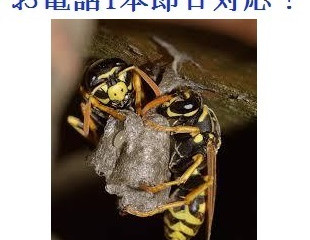 東京都稲城市のハチ駆除専門業者の害虫害獣駆除本舗