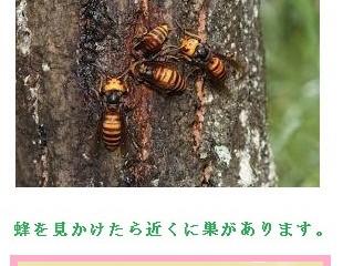 川崎市多摩区のスズメバチ駆除、アシナガバチ駆除