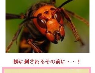 川崎市多摩区の蜂駆除、蜂の巣駆除