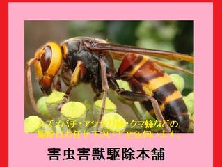 神奈川県横浜市緑区 スズメバチ駆除 蜂駆除 巣の撤去