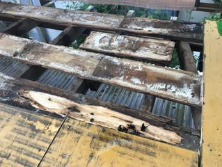 神奈川県川崎市宮前区 蜂駆除、巣の撤去
