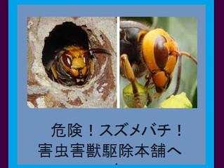 川崎市中原区の蜂駆除、蜂の巣駆除の専門業者