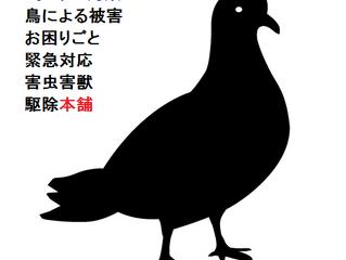 東京都害虫害獣駆除本舗【ハト駆除】ハトの被害について狛江市からの御依頼